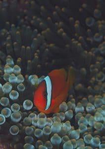 フィリピン・セブ・アポ島・ボホール島・ダイビングショップ