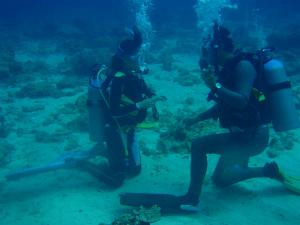 ダイビング免許のための潜水
