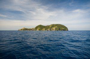 フィリピン アポ島 ダイビング